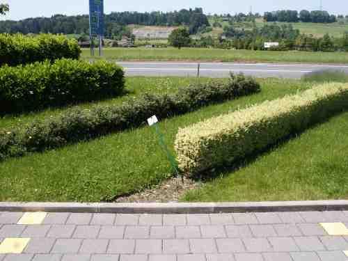 Pflegeleichte Hecke Garten : Pflegeleichte Heckenpflanzen Mit Wenig Aufwand Zu Einer Pictures to