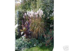 4 Gräser - Spiel im Wind (schöne Pflanzen)