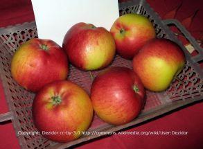 Rubinola, Apfel Baum, schorfresistent, süß und lecker