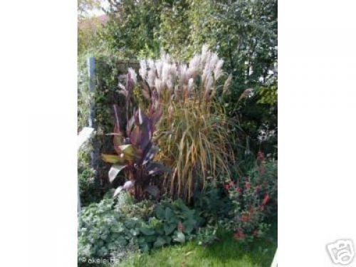 Gräser Pflanzen 4 gräser spiel im wind schöne pflanzen pflanzen versand